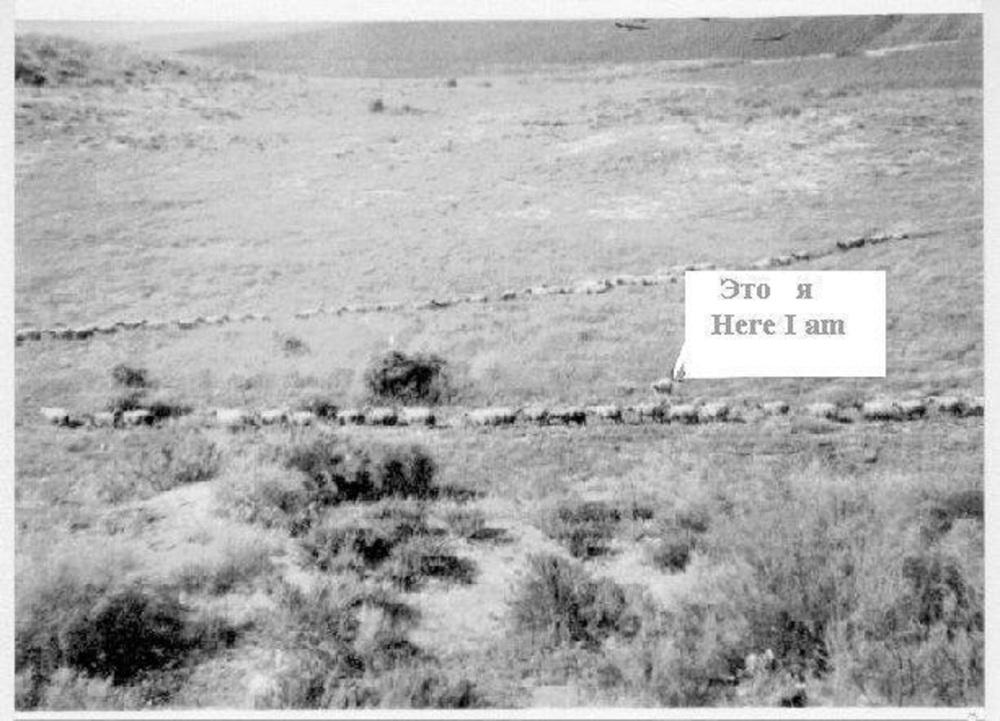 Sheeps 3